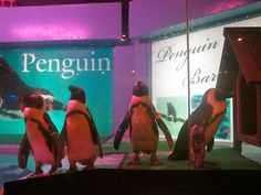 Penguin Bar. Naha, Okinawa.  A possibility for our anniversary date.