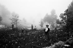 Opium Fields: Jacob Aue Sobol