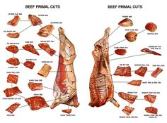 Beef Primal Cuts Chart. This is a good chart for the primal cuts including ribs.