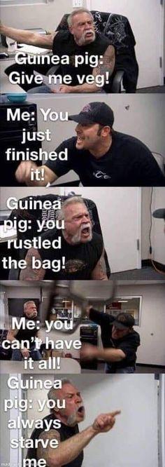 Guinea Pig Meme, hungry - Our Guinea Pig - Babypflege Guinea Pig House, Baby Guinea Pigs, Guinea Pig Care, Guinea Pig Funny, Animal Jokes, Funny Animal Memes, Funny Animal Videos, Funny Animals, Guinea Pig Quotes