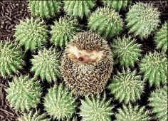 4624f01ffd0c 19 Best Cactus images in 2018 | Drawings, Cactus plants, Frases