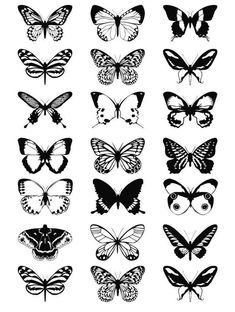 White Butterfly Tattoo, Unique Butterfly Tattoos, Butterfly Black And White, Butterfly Drawing, Butterfly Tattoo Designs, Butterfly Design, Black White, Butterfly Illustration, Band Tattoos
