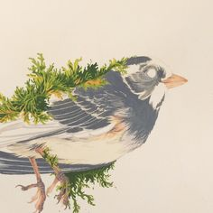Posting this after-the-fact-progress-shot of my junco painting from The Silent Aviary, because today I found and buried one of these darling birds on the Greenway bike path. Two days ago, my boyfriend and I found and buried a grey squirrel on the Minnehaha Trail. It's getting cold and animals are scurrying around in a hurry to bulk up or leave town for the winter. The nights are getting longer and mistakes happen easily in the dark. Please ride/drive slowly and be safe 💕🐦 (Also if any…