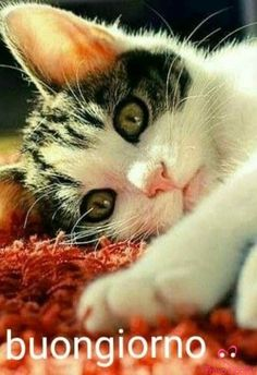 Click the Photo For More Adorable and Cute Cat Videos and Photos Kittens And Puppies, Baby Kittens, Cute Cats And Kittens, Kittens Cutest, Kitten Love, I Love Cats, Crazy Cats, Pretty Cats, Beautiful Cats
