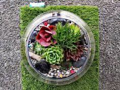 XXL Fishbowl Terrarium Fishbowl, Auckland, Terrarium, Cabbage, Vegetables, Home Decor, Round Fish Tank, Terrariums, Fish Tank
