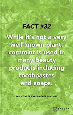 Fact No. 32 #TazekaFacts