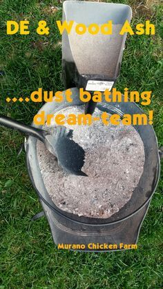 Murano Chicken Farm: Wood ash and DE, the dust bathing dream team