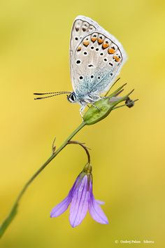 Butterfly by Ondrej Pakan on 500px