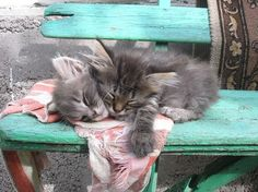 Kittens napping on bench