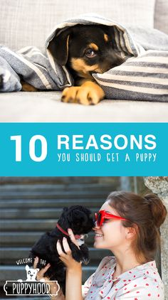 Adopting a puppy isn't easy. Raising your little guy (or girl!) requires a lot of time and money, but the reward of becoming a puppy parent is far greater than the cost of a few poops on the carpet. Check out this list of the 10 reasons why you should add a puppy to your life!