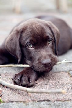 """This is really meant for your """"Must Love Dogs"""" board. Look at those eyes, that face!"""