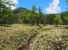 竜源橋と大河原峠のほぼ真ん中に位置する天祥寺原から望む蓼科山|八ヶ岳登山ルートガイド。Japan Alps mountain climbing route guide