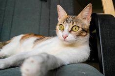 #REINA, la gata-traca, siempre dispuesta al juego y a ver lo que se cuece... http://adopcionesfelinas.foroactivo.com/t740-reina-gatita-tricolor-tabby-juguetona-esterilizada-apta-para-perros-nacida-en-julio14-en-adopcion-valencia…