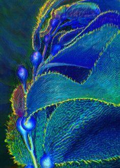Ocean Kelp ~ Jane Schnetlage ~ Strands of kelp rippling in the ocean current.