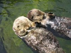 swimming otters. they mate for life and hold hands when they sleep on their backs so they don't loose each other.