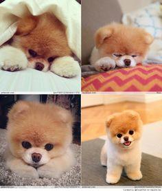 Cute BOO ...
