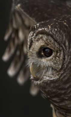 -m-  beautiful close-up photo.  Owl     looks so gentle!!!
