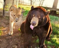 Happy Monday from Baloo... and Leo!