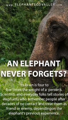 Survival camping tips Elephant Spirit Animal, Happy Elephant, Elephant Love, Animal Facts, Animal Quotes, Elephant Anatomy, Wild Creatures, Lovely Creatures, Elephant Facts