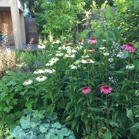 bloemen - wild - verschillende kleuren groen