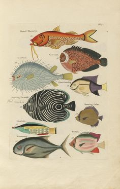 Fish, crayfish and crabs, various colors and extraordinary figures. Amsterdam, Reinier & Joshua Ottens.