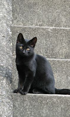 Black cat So beautiful. I love black cats and all cats. Neonwoman