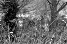 B, via Flickr. My photography. Photography Photos, Dandelion, Bird, Flowers, Dandelions, Birds, Taraxacum Officinale, Royal Icing Flowers, Flower