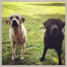 Cooper and Tucker ready to play ball