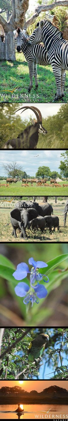 Little Makalolo Camp - The rains have arrived! Click on the image forthe full story.
