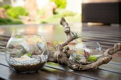 DIY Terrarium, with Liza Learn how to create a living mini garden to reflect your inner design sensibility