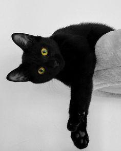 Gato, Gato Preto, Olhos De Gato De, Descanso
