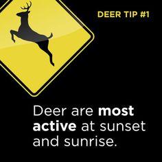Tip #1: Deer Driving tip