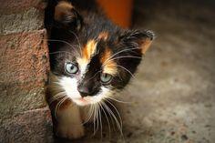 Kitten by Moniek