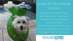 What are the 5 most common signs of heatstroke in dogs?
