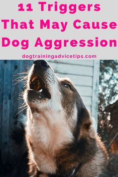 Dog Obedience Training - Dog aggression is a common problem with dog owners when dealing with their canine companions. Find out the top 11 triggers that may cause dog aggression. Dog Training Near Me, Online Dog Training, Basic Dog Training, Agility Training, Dog Agility, Potty Training, Training Classes, Dog Aggression Training, Puppy Aggression