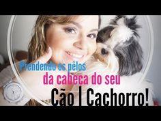 Prendendo os pêlos da cabeça do seu cão | cãozinho | cachorro | cachorrinho! - YouTube