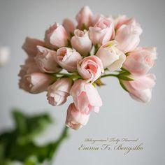Pelargonium 'Emma'