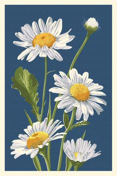 Daisy - Letterpress Sizes Art Prints, Giclees, Posters, Wood & Metal S. Daisy Drawing, Daisy Painting, Acrylic Painting Flowers, Watercolor Flowers, Watercolor Paintings, Daisy Art, Art Floral, Metal Signs, Painting Inspiration