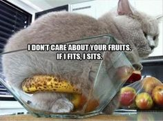 I Don't Care About Your Fruits. If I Fits, I Sits