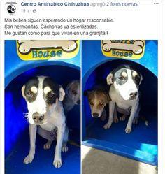 Buscan hogar para perritos y gatitos; el Centro Antirrábico los da en adopción gratuita a través de facebook | El Puntero