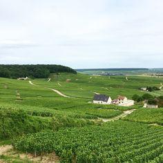Vignobles de Champagne France