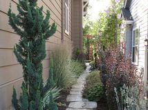 Cool conifers on pinterest miniature gardens garden for Narrow trees for tight spaces