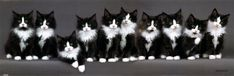 Ten black and white cats...and one is very lazy!!!