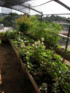 how to build rooftop garden with interesting wooden frame plant