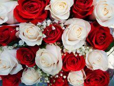 Roser, Bryllup, Buket, Rød, Hvid, Romantik, Sommer