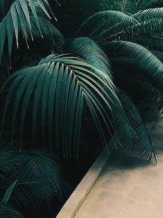 Lover of beautiful palm leaves