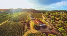 Quitting your day job and buying a beautiful country vineyard may seem like a distant daydream. But the truth is, it isn't really that far-fetched an idea. -@ Finewine Empire