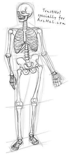 Skeleton Drawings, Skeleton Art, Pencil Art Drawings, Art Drawings Sketches, Easy Drawings, Anatomy Sketches, Anatomy Drawing, Bone Drawing, Human Body