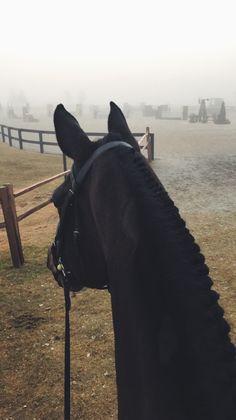 Braids Braids - Art Of Equitation Cute Horses, Pretty Horses, Horse Love, Beautiful Horses, Animals Beautiful, Horse Photos, Horse Pictures, Food Pictures, Cavalo Wallpaper