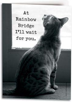 White Cat Rainbow Bridge